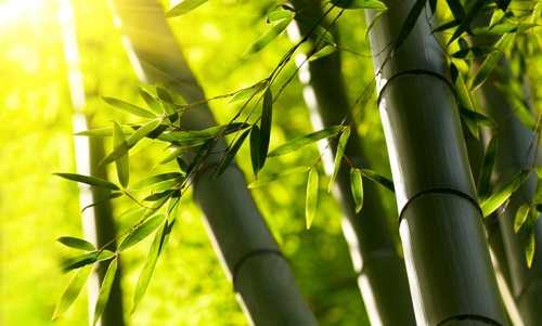 Why Bamboo is Great